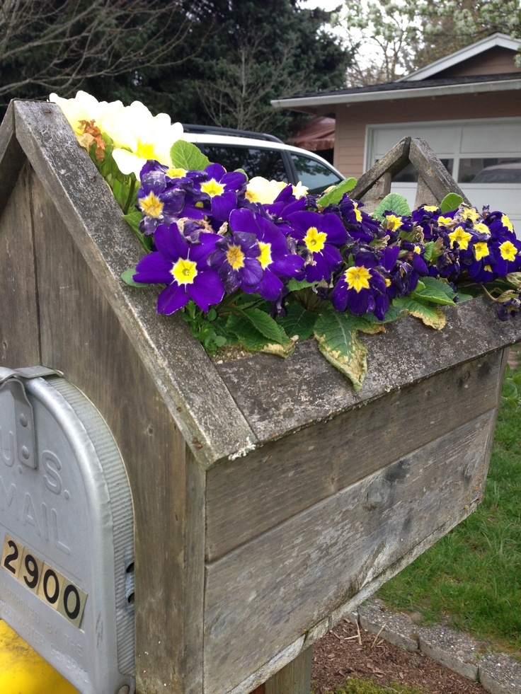 "Cute mailbox idea- visions of a ""green roof"" mailbox!"