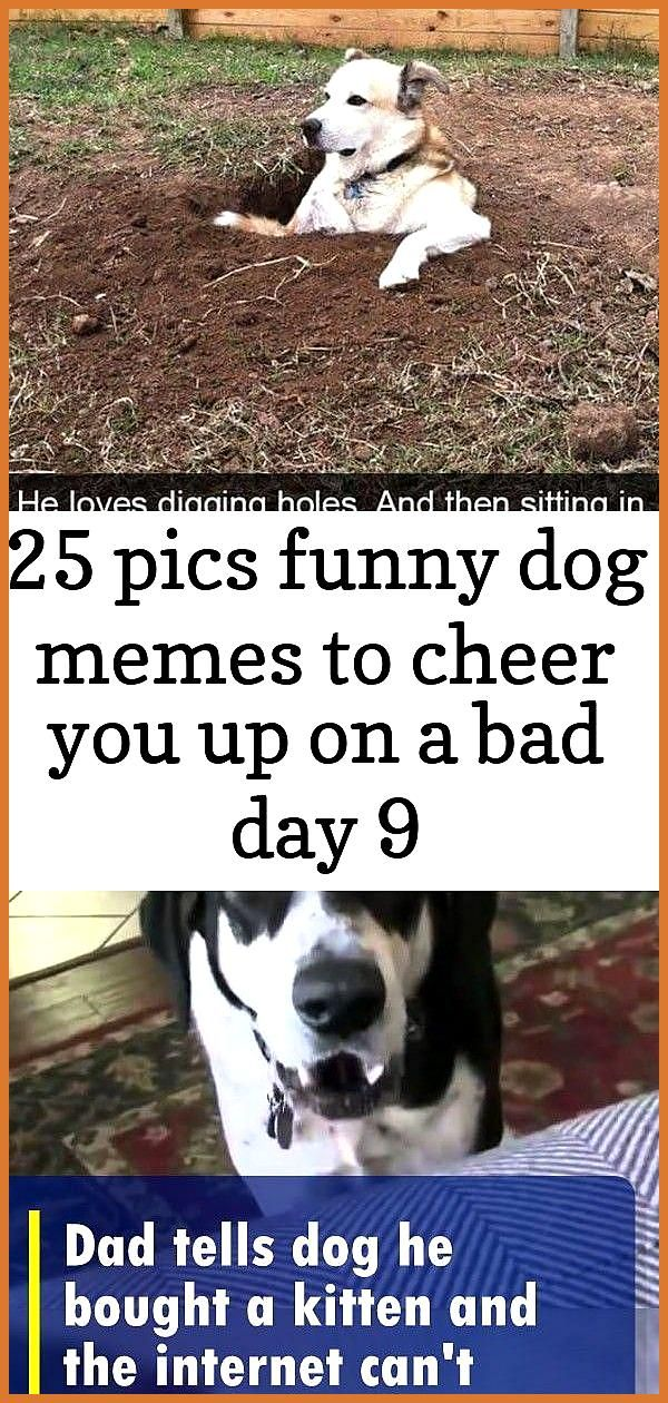 Sell On Amazon Dog Memes Cheer Up Funny Funny Animals
