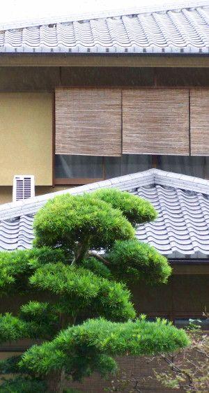 Niwaki And Niwaki Creation Courses   Japanese Garden Institute   Japanese  Gardens   Study Tour In Japan   Teaching Videos E Learning