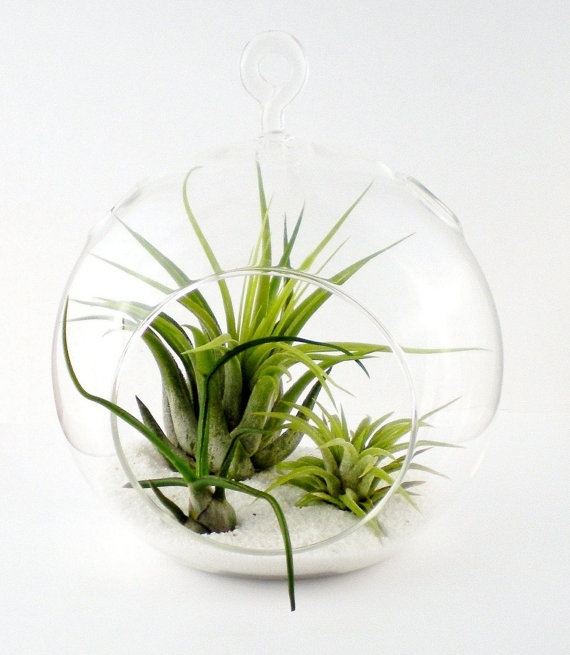 195 Best Terrarium's . Air And Water Gardens Images On