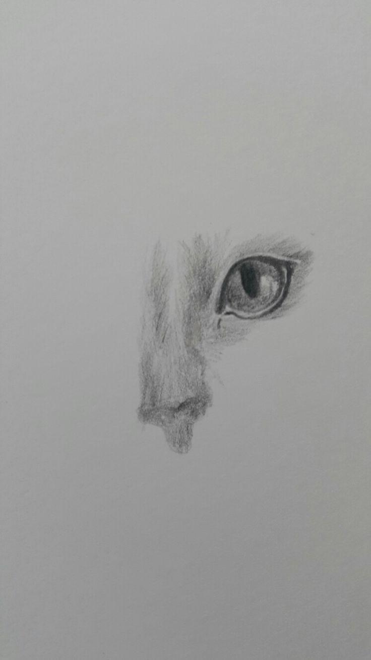Kimbo's Eye colour pencil on paper
