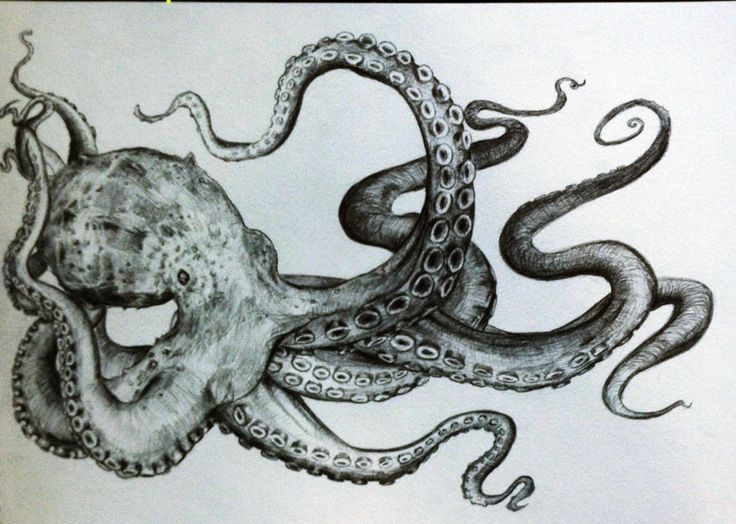 black and white, drawing, octopus, pencil, squid, street art Octopus : More Like This At FOSTERGINGER @ Pinterest