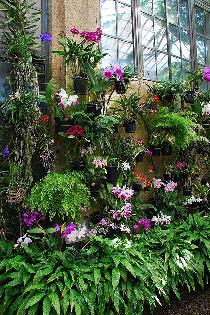Longwood Gardens - Orchid Room Longwood has over 9,000 orchids in their greenhouses, and approximately 300 are in the orchid room at any given time. Longwood Gardens - Orchid Room by Steve_Logan, via Flickr
