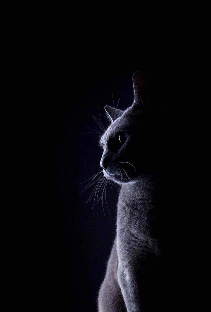 Epingle Par Pastrana Sur Chats Photographie De Chat Animaux Noir Et Blanc Beaux Chats