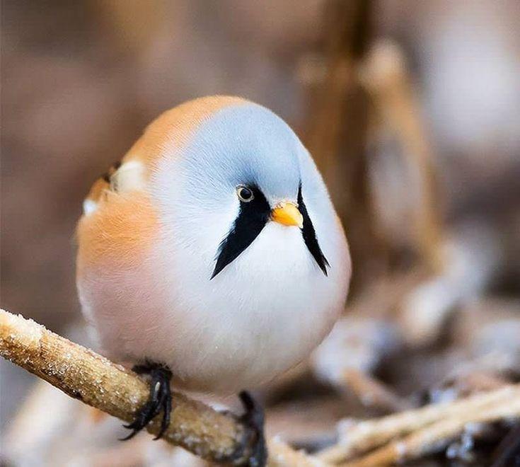 Картинки с милыми птичками