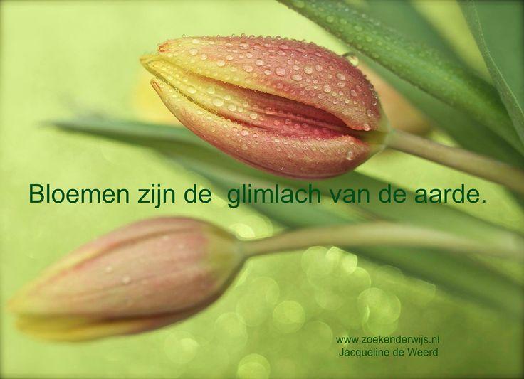 Bloemen zijn de glimlach van de aarde. Inspiratie www.zoekenderwijs.nl