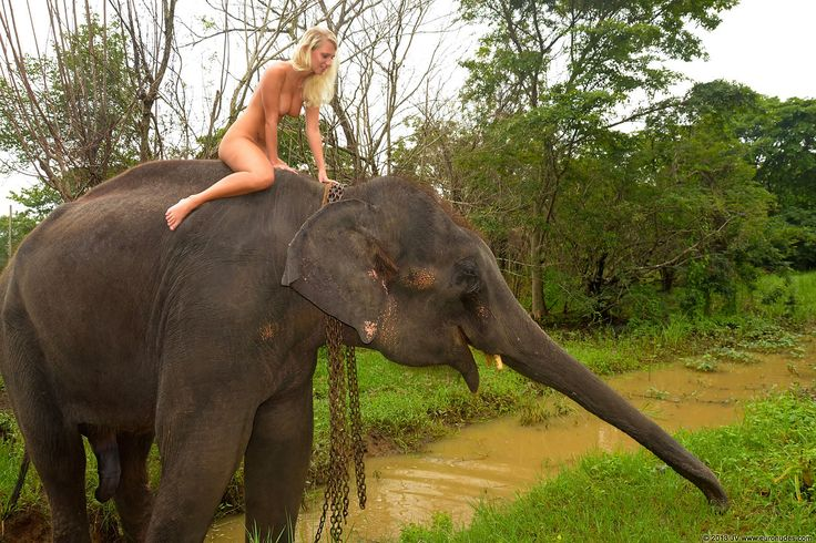 Nude women and elephants