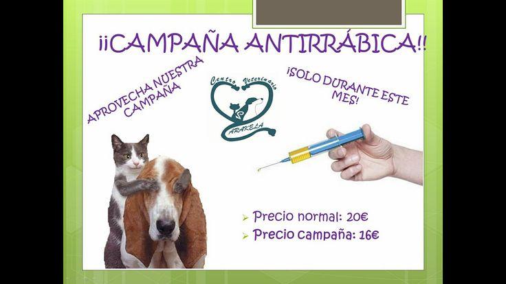 ¡¡COMIENZA JUNIO, Y CON ÉL NUESTRA CAMPAÑA ANTIRRÁBICA!! Os recordamos que en la Comunidad de Madrid es obligatoria la vacunación. ¡Aprovecha este mes y disfruta de nuestro descuento!😊😊