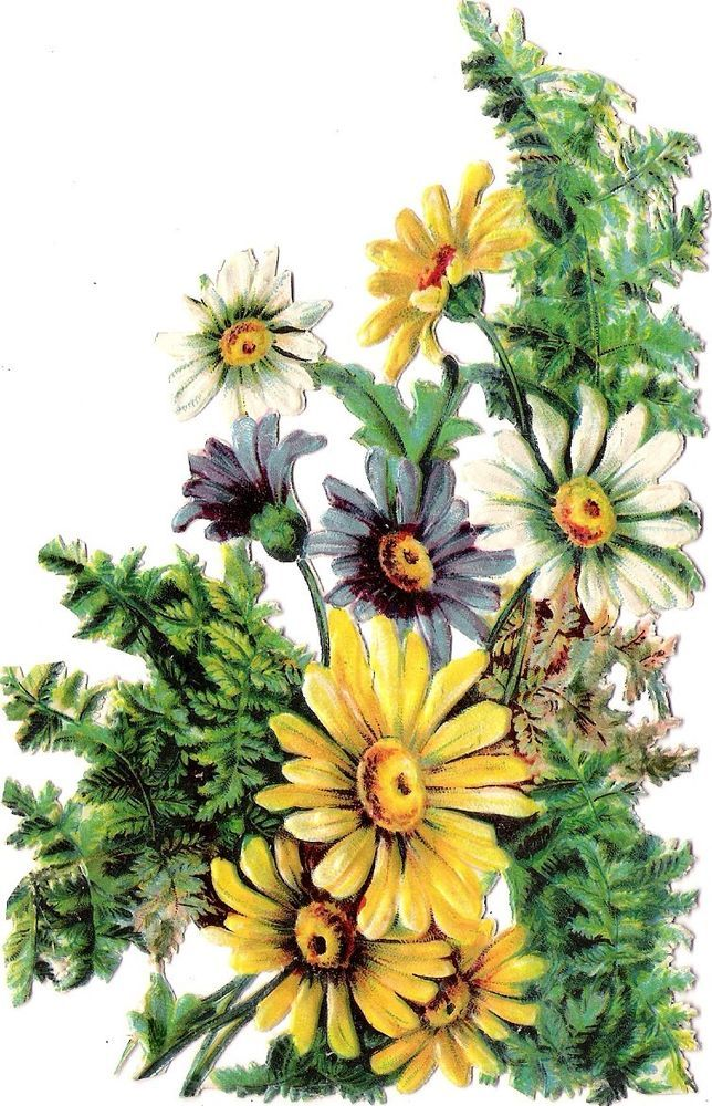 Oblaten Glanzbild scrap die cut chromo Blume flower 15cm Bouquet Margeriten