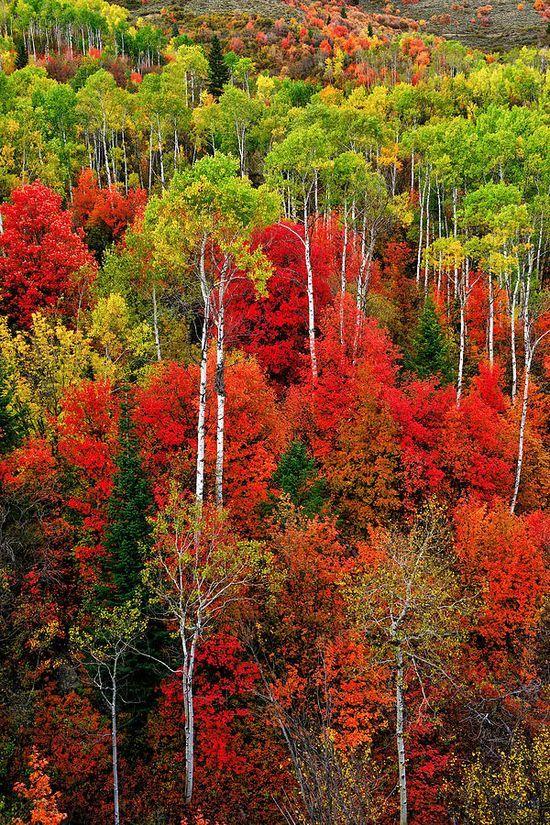 idaho Herbstzeit
