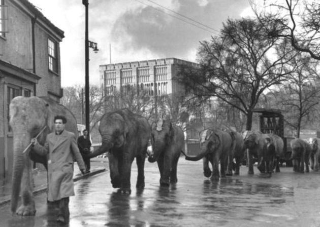 From our archives: Elephants march through Norwich on April1 1952