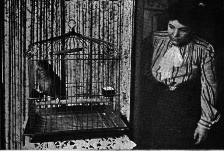 how to start a bird breeding business
