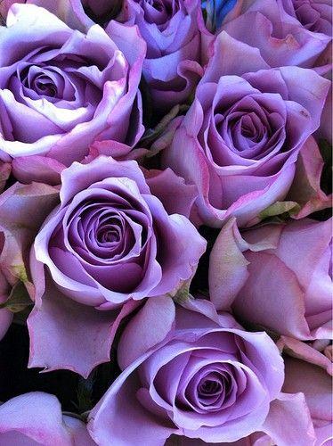 Purple roses...
