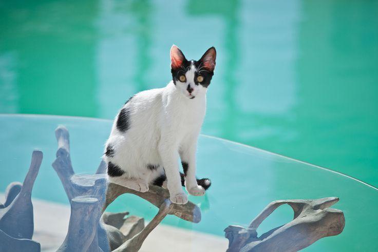 #acqua #cat #patmos #blu #blue