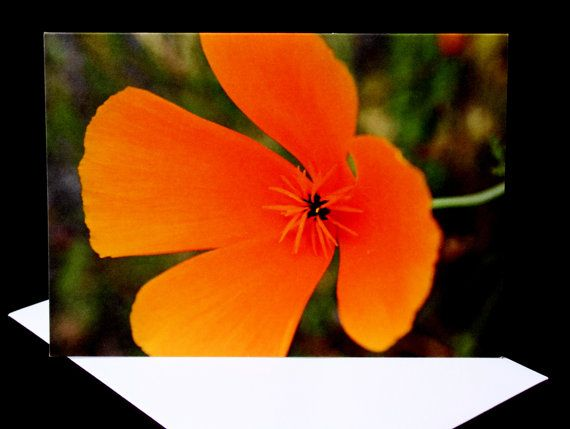 Orange Flower Greeting Card Blank A6 Notecard by PforPoppy on Etsy, €2.75