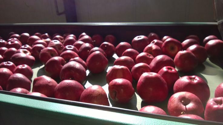 Ο σύγχρονος εξοπλισμός της εταιρίας μας περιλαμβάνει μηχανήματα διαλογής τελευταίας τεχνολογίας απο όπου περνάνε τα μήλα πριν την συσκευασία τους. Κεντρικά γραφεία Φιλίππου 10, Έδεσσα Τ.Κ.: 58200 Τηλ: 23810- 23237 Φαξ: 23810- 23159 email: sales@realfruit.gr website: www.realfruit.gr Παναγίτσα Έδεσσας 1ο χιλ. Παναγίτσας- Έδεσσας τ.κ: 58002 Τηλ: 23810- 34303 Φαξ: 23810- 23159