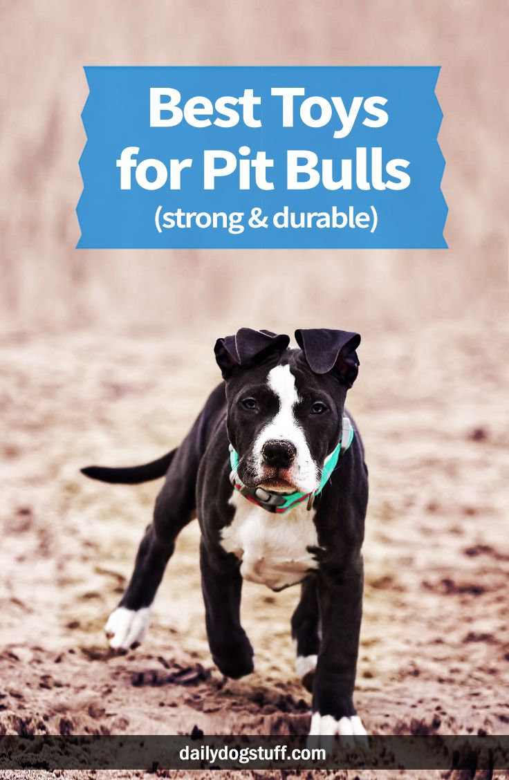 Best Toys For Pit Bulls Strong Durable Pitbulls Best Dog