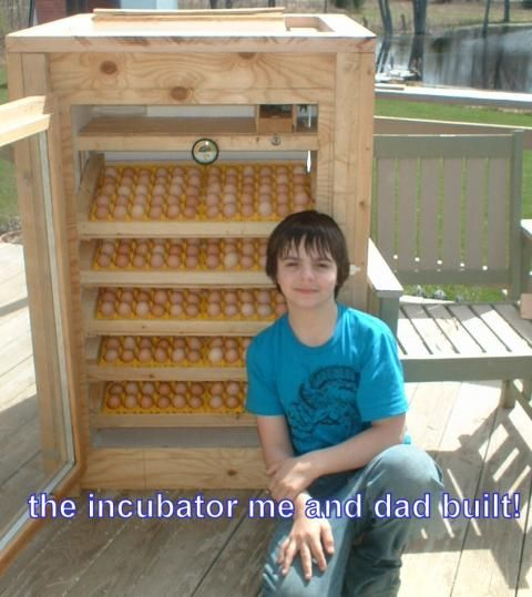 Chicken incubator business plan