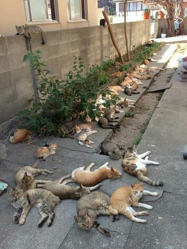 In Tashirojima, Japan there are more cats than people.