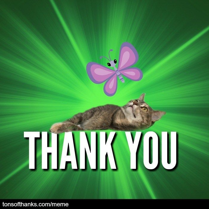 51 Nice Thank You Memes With Cats Thank You Cat Meme Thank You Memes Memes