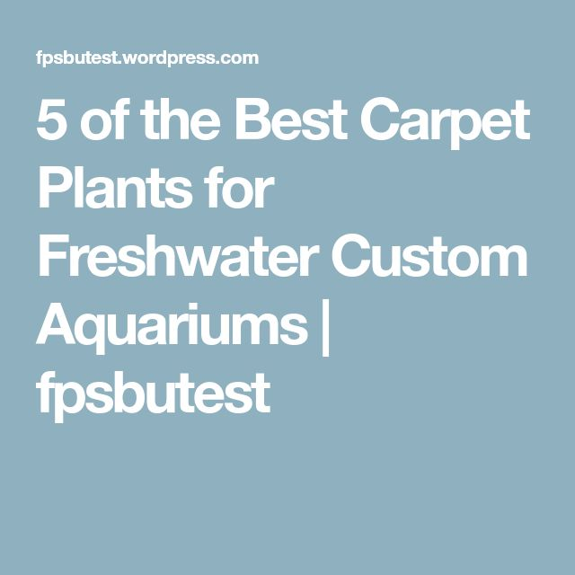 5 of the Best Carpet Plants for Freshwater Custom Aquariums | fpsbutest