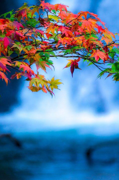 日光戦場ヶ原 Nikko, Japan #AutumnLeaves
