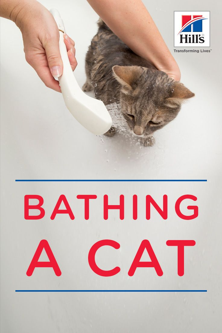 Bathing A Cat Tools Tips Hill S Pet Cat Care Cats Smelly Cat