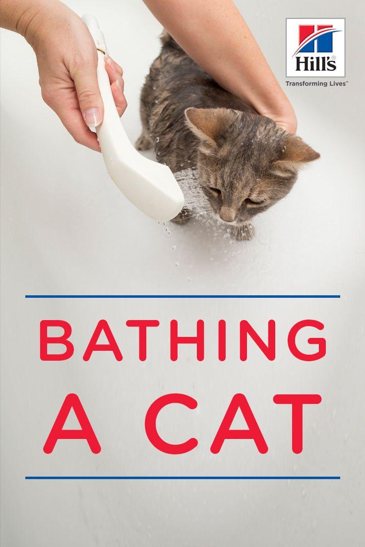 Bathing A Cat Tools Tips Cat Behavior Cats Pet Health