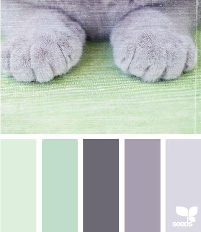 paw tones (ombre mint & grey)