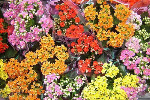 3 könnyen gondozható virágos dísznövény, otthonunkba!