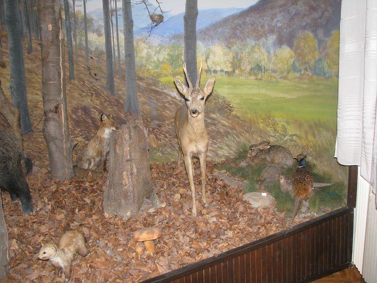 Zilahy Aladár Erdészeti Múzeum (Szilvásvárad közelében 1.8 km) http://www.turabazis.hu/latnivalok_ismerteto_3908 #latnivalo #szilvasvarad #turabazis #hungary #magyarorszag #travel #tura #turista #kirandulas