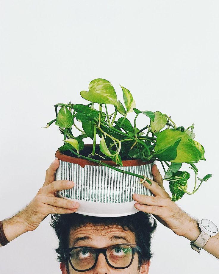 más de 25 ideas increíbles sobre macetas de cabeza en pinterest
