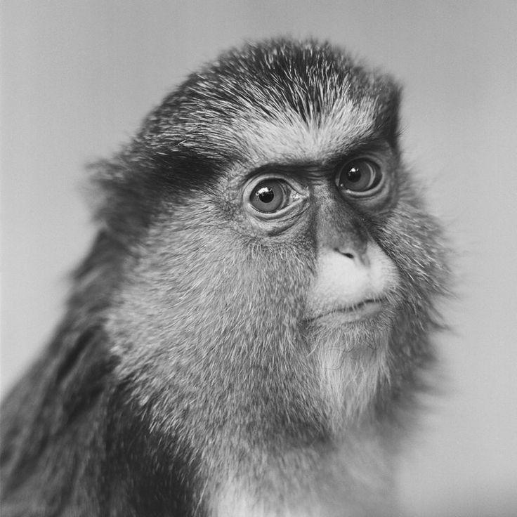 Jacek Kusz - Mona Monkey - from the Zoo Essay