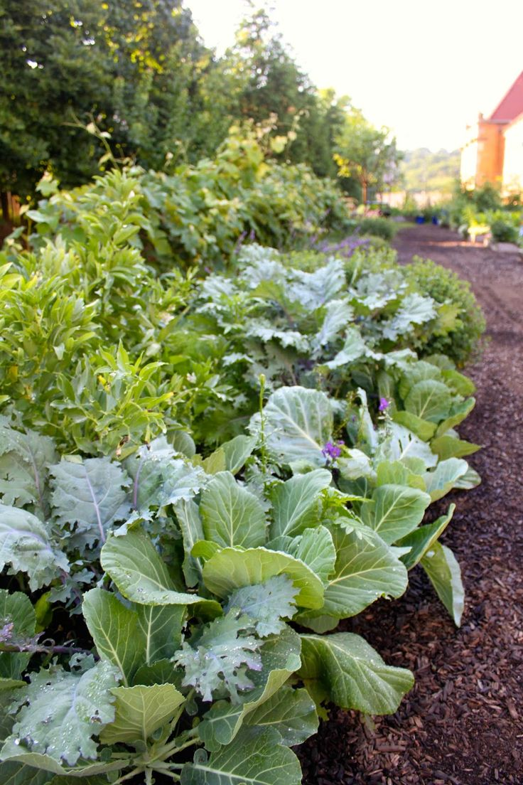 97 best Edible Landscaping images on Pinterest Edible garden