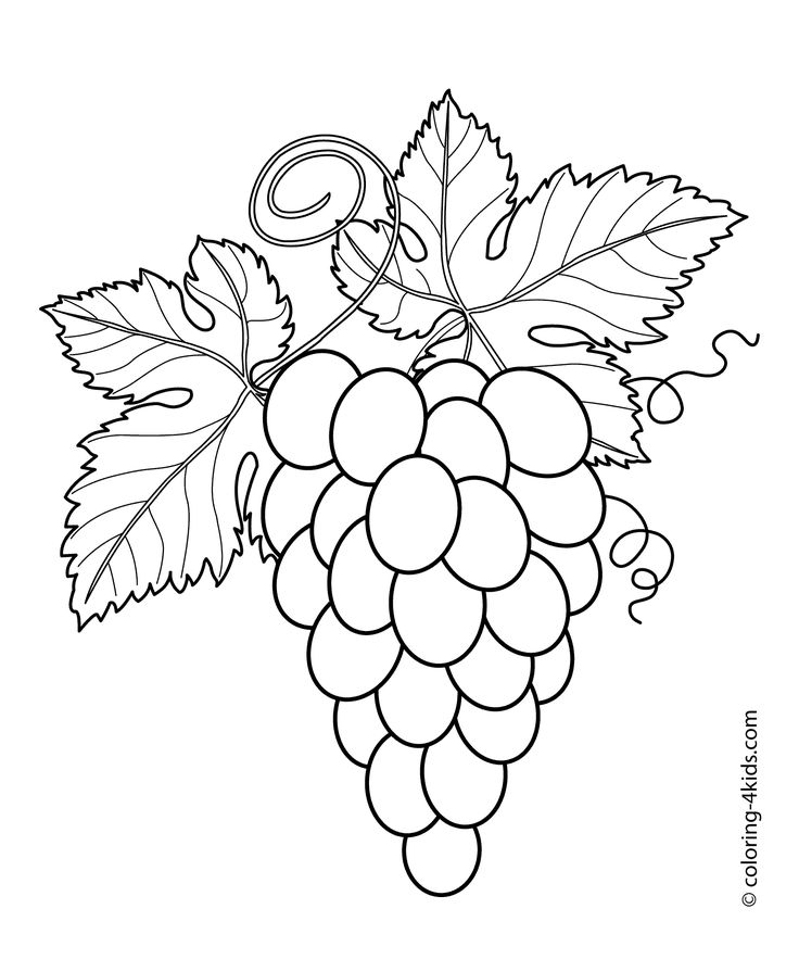 Grapes with leaves fruits and berries coloring pages for kids, printable free
