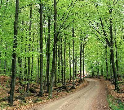 När ni bor hos oss kan ni vandra på våra nya fina vandrings leder från 2 km till flera mil