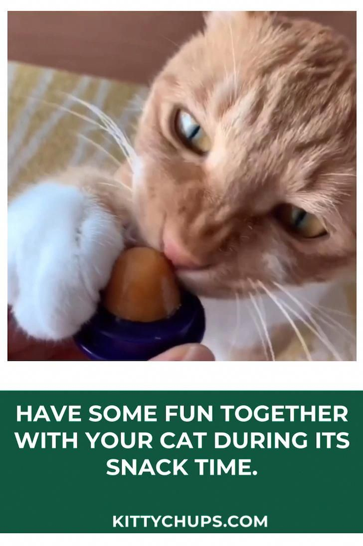 Exceptional Funny Cats Tips Are Readily Available On Our Internet Site Have A Look And You Wont Be Sorry You Did Fu In 2020 Kitten Treats Cats Cute Dogs And Puppies