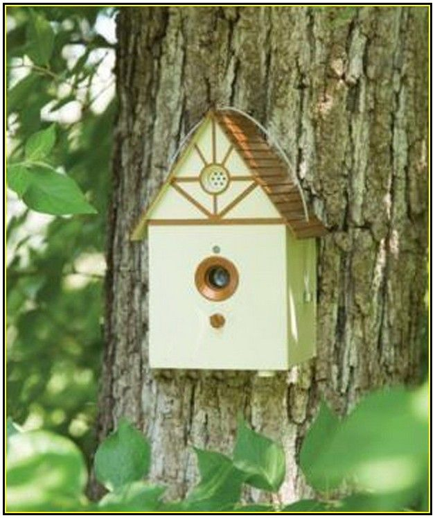 31 Best Images About Bird House Design On Pinterest