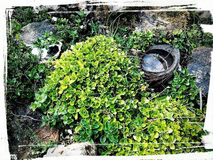 Bylinná zahrádka našich prababiček – Experimentalní zahrada pod Blaníkem