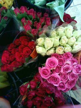 růže velikonoční (48 pieces)