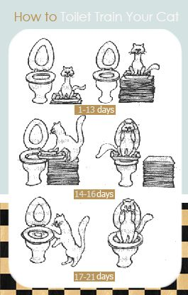 How-to-Toilet-Train-Your-Cat