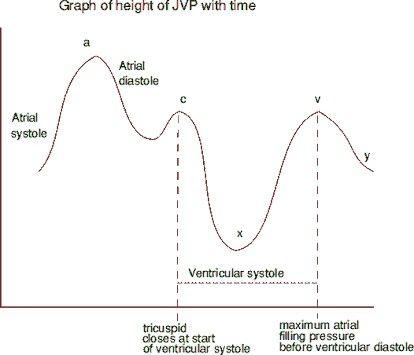 JVP graph