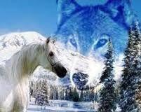 """Képtalálat a következőre: """"farkasok képek"""""""