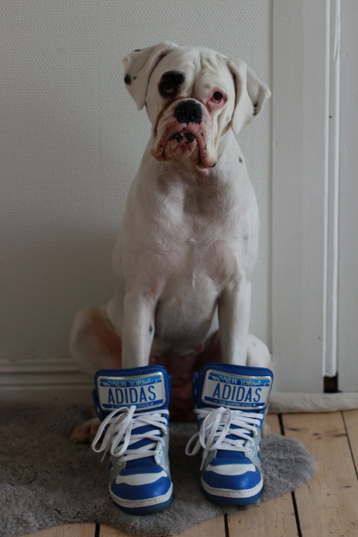 #Lulu poser med #Jeremy #scott #adidas sko. FTW. flink hund.
