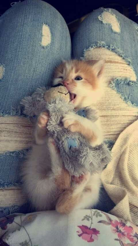 Kitten playing with doll!:*-)