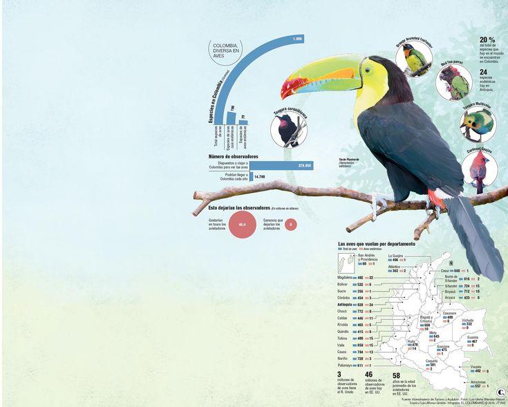 Colombia quiere que los extranjeros vengan a ver aves