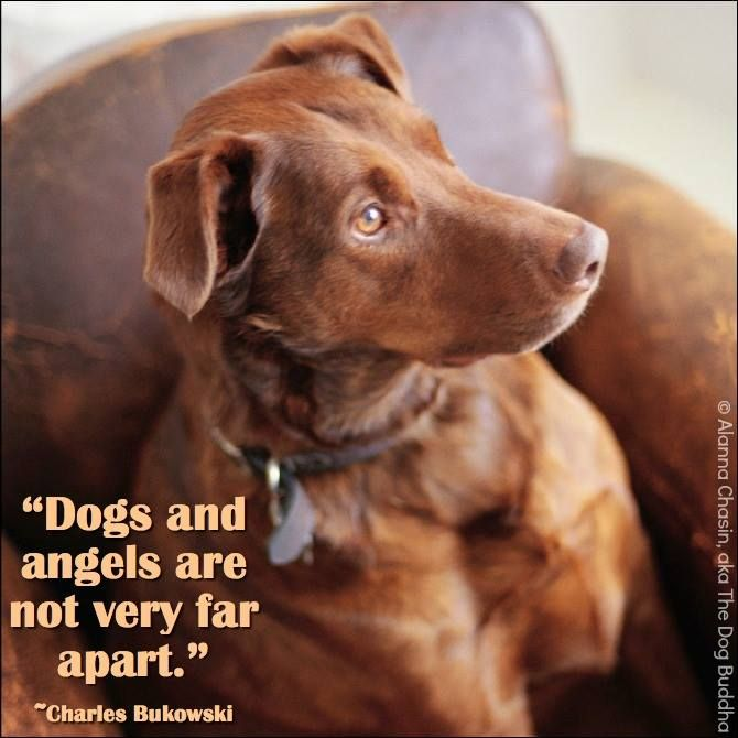 "quotes about dogs / ""dogs and angels are not very far apart"" <3"