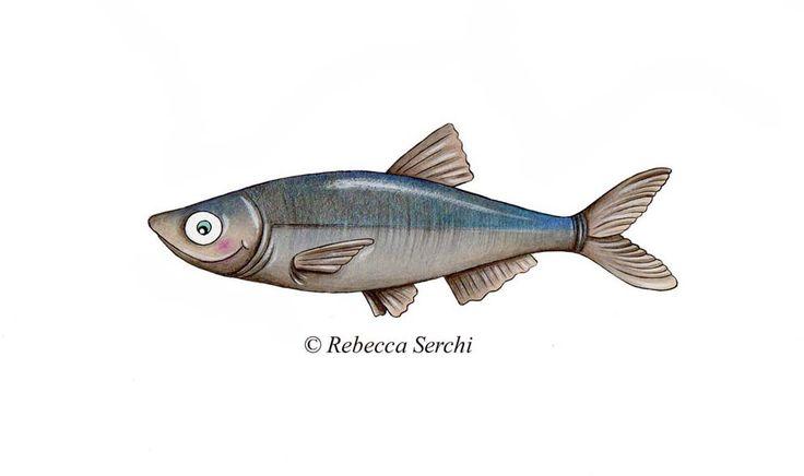 Berto il pesce di Rignano sull'Arno