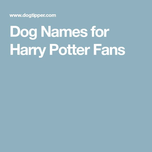 Dog Names for Harry Potter Fans