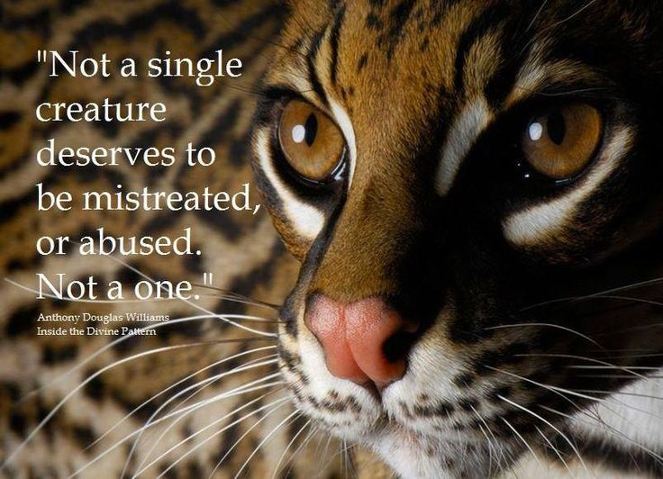 104 Best Animal Quotes And Animals Lovers' Quotes Images